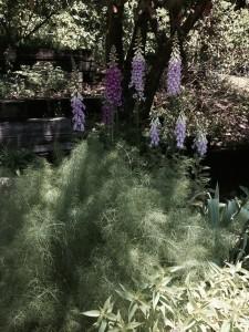 BH Garden 1